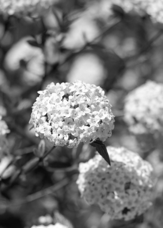 Kensington Palace (1 of 1)