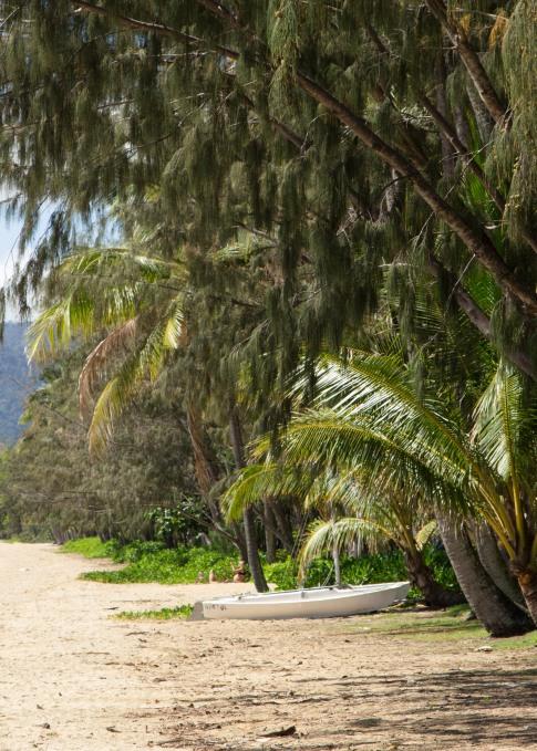 palmcove-3